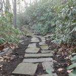 Path in the rhododendrons in front of house.