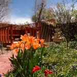 Garden in bloom with the earely Spring