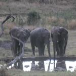 our late afternoon visitors