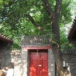 tree in e courtyard