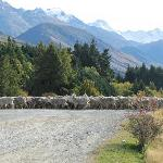 Sheep crossing road at Glentanner