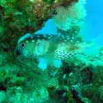 Korallen bieten Schutz