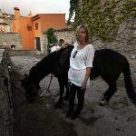 One of the horses, Miel