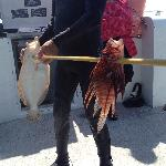 Lion Fish & Flounder, speared by one of the other divers on the boat.