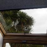 palms outside skylight