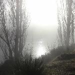 Early morning mist over Clutha River from suite