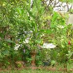 Garden with birds bath