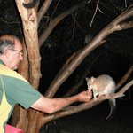 The owner feeding the Possums.