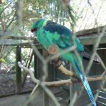 Beautiful coloured bird