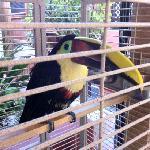 'Leo' - he's a happy bird, as far as caged birds go...