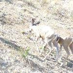 Deer At Malibu State park
