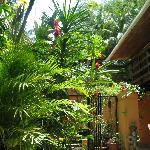 tthe courtyard