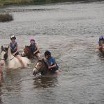 Swimming with the ponies
