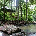Secluded cottages in the rainforest