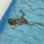 Our Plunge Pool Visitor