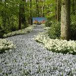 Floriade Flower Festival, Venlo, The Netherlands