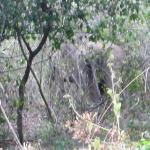 Elephants in Chinnar wildlife sanctuary