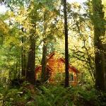 Muir Cabin in the Fall