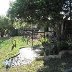 Garten mit Esel