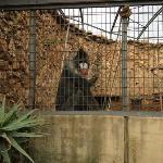 Mandrill at the JHB zoo