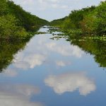 Canal used as a fire wall in the Everglades.