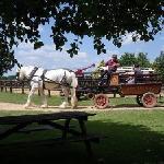 Wagon Rides around the park