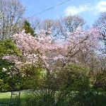 Banerigg Side Garden