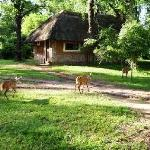 Wildlife Camp Foto