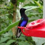Ecuador birding-hummingbirds in Mindo