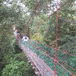 Canopy BRL
