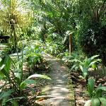 Jungle path to our bungalow