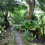 Jungle path from our bungalow to the bar
