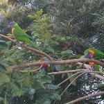 Beautiful birds in Jan's B&B backyard