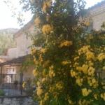 Yellow roses outside my room