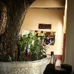 View of the tree and bar