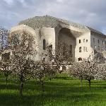 Goetheanum blossoms