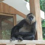 Monkey hanging out