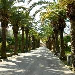 viale di ingresso dei giardini Iblei