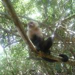 A cafe monkey ...right around the corner..National Park...