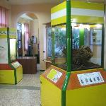 sala con teche insetti (vivi) e descrizioni