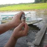 Piranhas selbst gefangen
