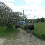 auf dem Gelände befinden sich Strauße, Pferde, Kaninchen, Katzen , Ziegen ein Hund und auch ein