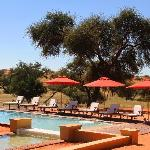 Our pool at Zebra Kalahari Lodge