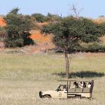 Let us take you on a Game Drive!