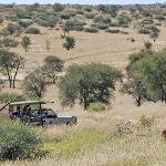 See the Kalahari Lion on our 9000ha reserve!