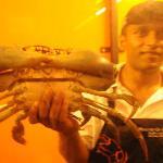 2.2kg crab
