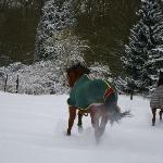 chevaux en pension