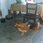 Chickens in Dan O'Hara's cottage