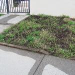 NO Upkeep of Grounds