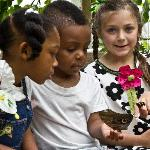 Visit Magic Wings Butterfly House, one of the largest tropical conservatories in the southeast.